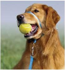 training leash deal