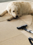 green clean carpet cleaning deal