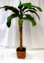 indoor bannana tree deal