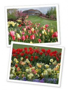 Thanksgiving Point Tulip Festival Giveaway