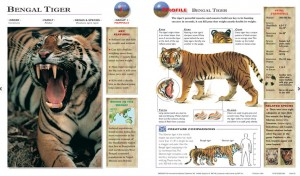 bengal tiger 300x176 36 Wildlife Explorer Cards for $3.99!