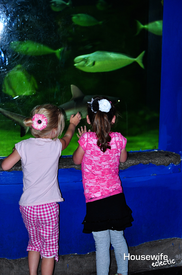 Aquarium looking at fish