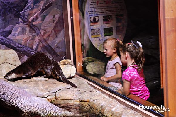 Aquarium otters