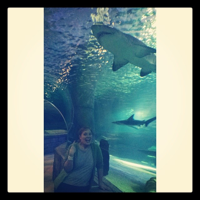 Mall of America Shark
