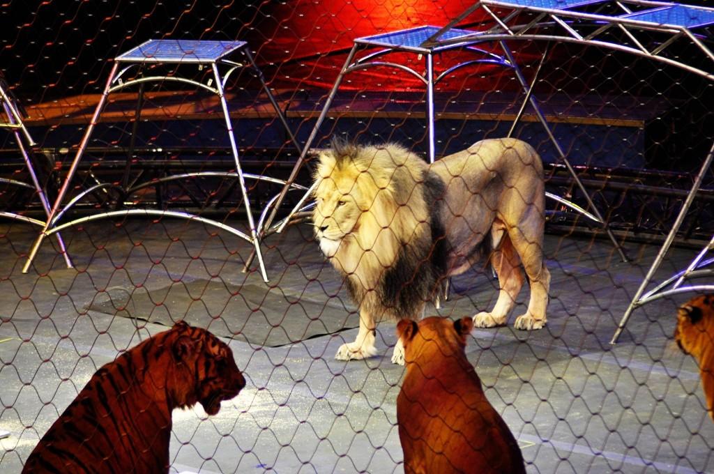 Cirucs Lion