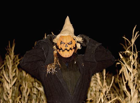 Cornbellys Corn Maze Pumpkin Fest Insanity Point Cornbellys Corn Maze & Pumpkin Fest & Insanity Point Discounted Passes! $22.10 for 2 People (Reg $42)