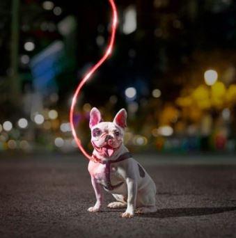 litey leash