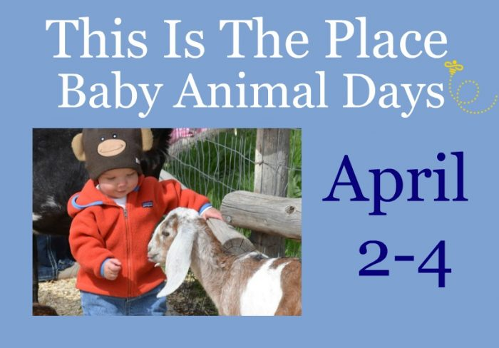This is the Place Baby Animal Days