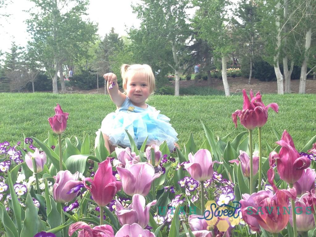 tulip festival 3