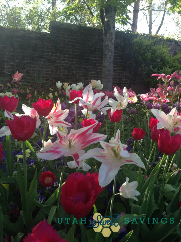 Last 2 Weeks For The Tulip Festival At Thanksgiving Point Tips What To Expect Giveaway