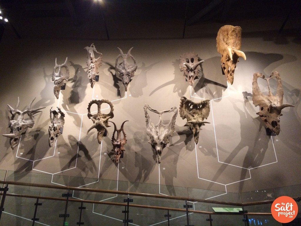 natural hisotry museum 2