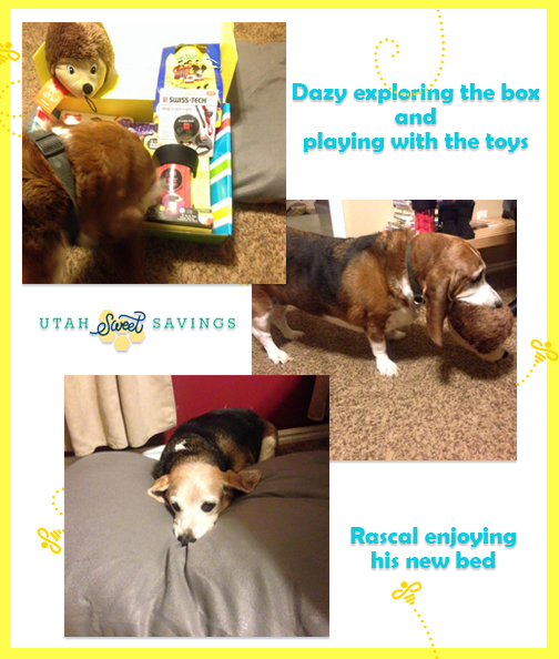 pet treater 2 collage