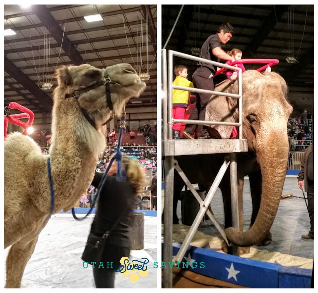jordan circus animals