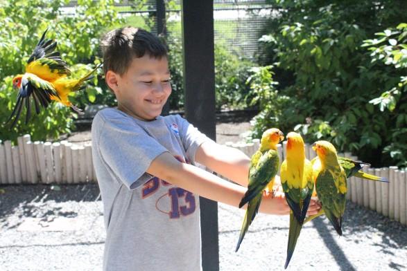tracy aviary 3