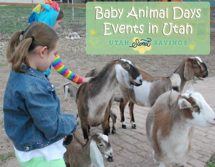 baby animal days events in utah