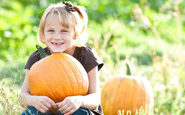hee-haw-farms-discounted-halloween-corn-maze-pumpkin-passes